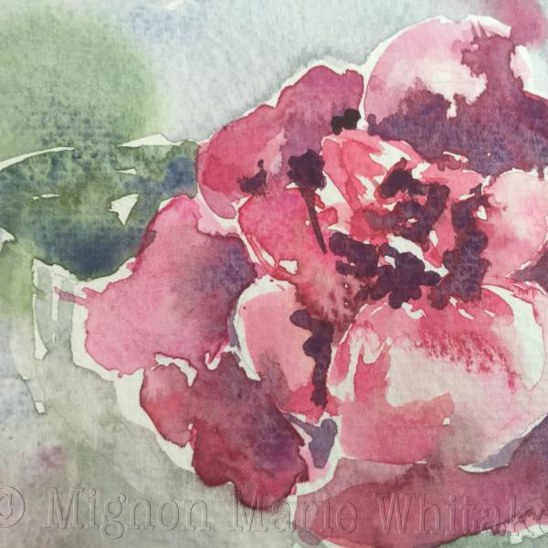 floral, flower, pink, watercolor